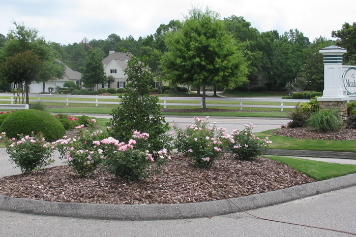 Little Miss Mow It All Newsletter March/April 2017 | Crape Myrtle Pruning | Irrigation | Pre-Emergent | Spring Annuals