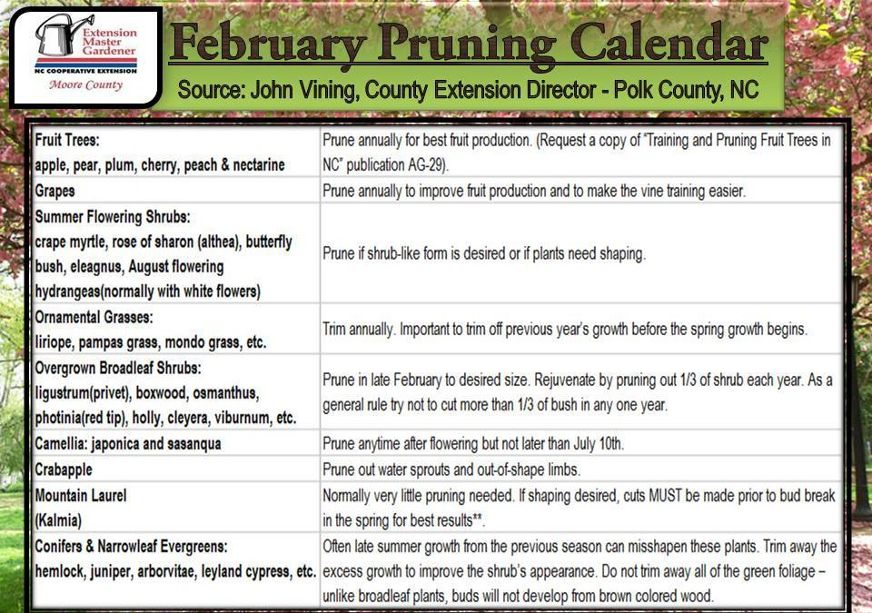 February Pruning Calendar | Gardening Tips NC