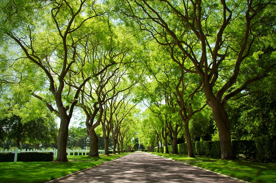 Stress falls as exposure to trees increases